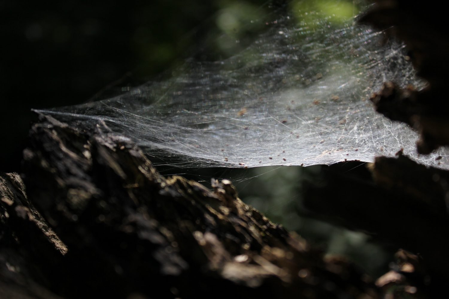 Web in forest